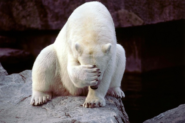 java concurrency sad polar bear